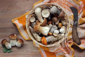 paleo lebensmittel pilze